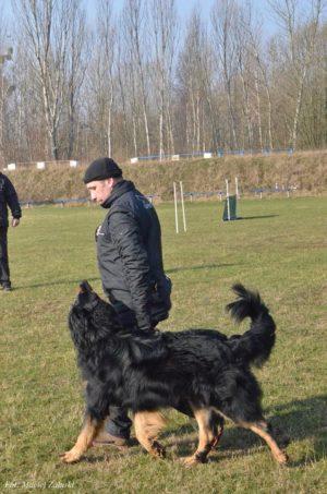 Trening posłuszeństwo Hovawart Basile Trzy Wiedzmy z Jackiem Lewkowiczem